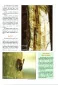 FICHA Nº3 Paranthrene tabaniformis, taladro del chopo ... - redforesta - Page 2