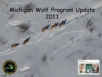 Wolves in Michigan