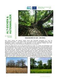 Alt-Eichen und Hutewälder - EU LIFE Soonwald