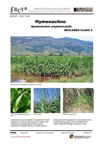 Hymenachne - PP54 - Central Queensland University