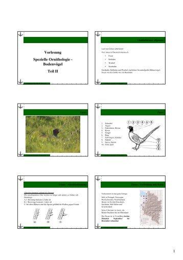 Vortrag Spezielle Ornithologie 2012_pdf_Teil 2 - Vorarlberger ...