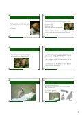 Vortrag Spezielle Ornithologie 2012_pdf_Teil 2 - Vorarlberger ... - Page 5