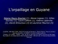 L'orpaillage en Guyane - Vulnérabilité et résilience des écosystèmes