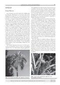 Vegetación y Fitogeografía - Aves Argentinas - Page 5