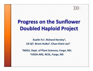 Progress on the Sunflower Doubled Haploid Project - National ...