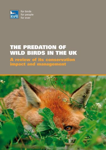 THE PREDATION OF WILD BIRDS IN THE UK - RSPB