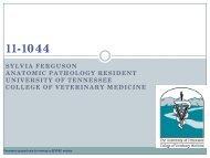 sylvia ferguson anatomic pathology resident university of tennessee ...