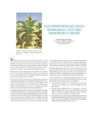 Planta normal de Tabaco Virginia. (San - Universidad de Chile