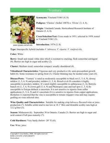 'Ventura' - Viticulture Iowa State University