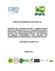 Informe etapa 4 - proyecto uvaconcagua enero 2011 - Platina - INIA