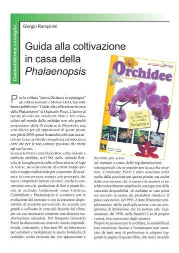 Guida alla coltivazione in casa della Phalaenopsis ... - Clamer Informa