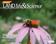 The Plight of Pollinators - The University of Tennessee Institute of ...