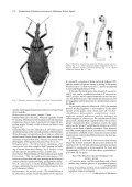 Rhodnius amazonicus Almeida, Santos & Sposina, 1973 ... - SciELO - Page 2