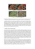 Damage Detection of the 2011 Tohoku, Japan Earthquake from ... - Page 7