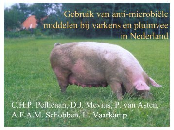 Gebruik van anti-microbiële middelen bij varkens en ... - SWAB