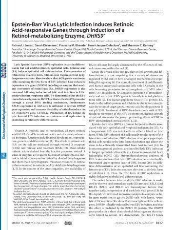 Epstein-Barr Virus Lytic Infection Induces Retinoic Acid-responsive ...