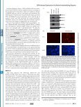 Epstein-Barr Virus Lytic Infection Induces Retinoic Acid-responsive ... - Page 3