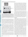 Epstein-Barr Virus Lytic Infection Induces Retinoic Acid-responsive ... - Page 6