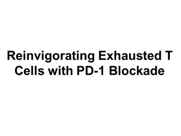Reinvigorating Exhausted T Cells with PD-1 ... - GLOBE Network