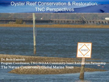 Oyster Reef Conservation & Restoration: TNC Perspectives