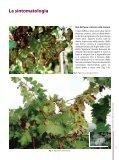 Le malattie del legno della vite di origine fungina - Sardegna ... - Page 7