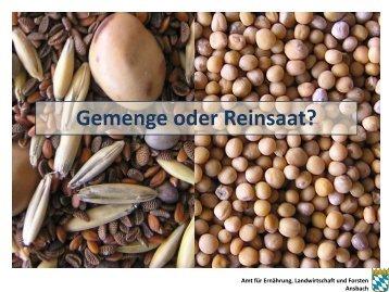 Gemenge oder Reinsaat? - Amt für Ernährung, Landwirtschaft und ...