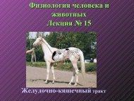 Лекция 15 ЖКТ.pdf