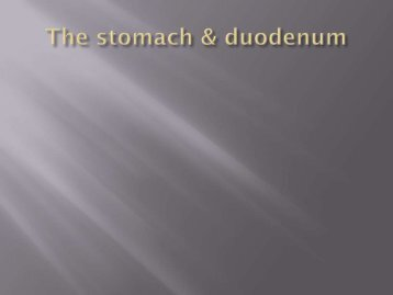 The stomach & duodenum
