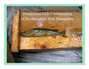 Native Fish Communities of Southeastern New Hampshire