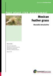 Pest plant risk assessment Mexican feather grass Nassella tenuissima