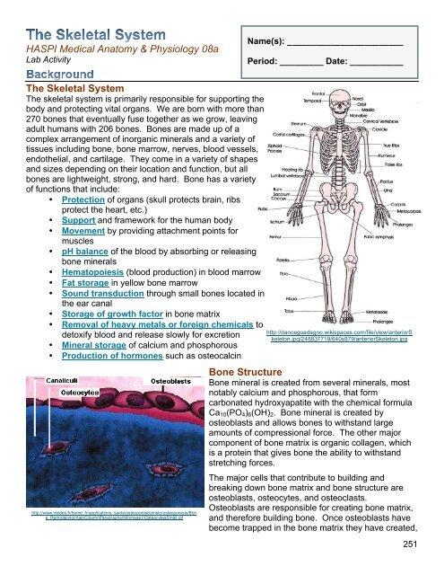 08a The Skeletal System Pdf Haspi Org