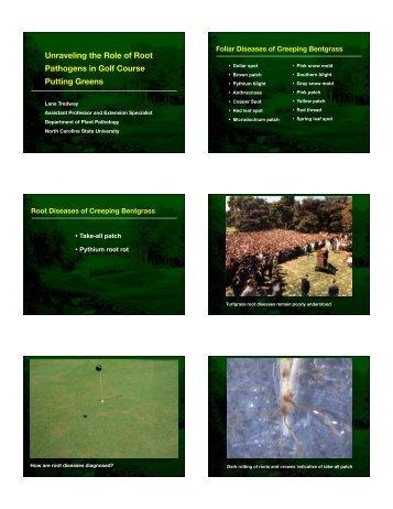 Bentgrass Root Diseases - TurfFiles - North Carolina State University