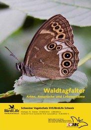 Waldtagfalter im Wald - naturschutz.ch, Natur