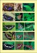Waldtagfalter im Wald - naturschutz.ch, Natur - Page 3