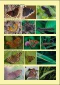 Waldtagfalter im Wald - naturschutz.ch, Natur - Page 4