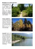 Waldtagfalter im Wald - naturschutz.ch, Natur - Page 6