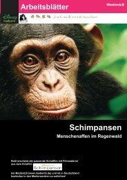 Schimpansen Affen im Regenwald - Sufino.de - dein Freizeitland