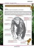 Schimpansen Affen im Regenwald - Sufino.de - dein Freizeitland - Seite 5