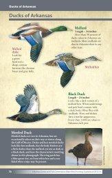 130824_GBK 2013-14 Waterfowl Guidebook.indd - Arkansas Game ...