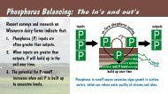 Phosphorus Balancing Card: The Ins and Outs