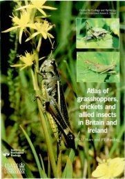 Atlas of grasshoppers, crickets and allied insects in