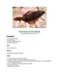 WINTER FLOUNDER - Division of Fish and Wildlife