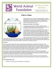 Fish in Tanks - World Animal Foundation