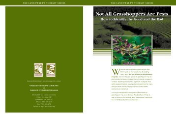 Not All Grasshoppers Are Pests Not All Grasshoppers Are Pests