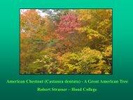 American Chestnut (Castanea dentata) - A Great American Tree ...