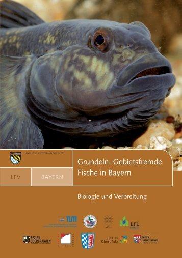 PDF 5 MB - Digitaler Fischartenatlas von Deutschland und Österreich