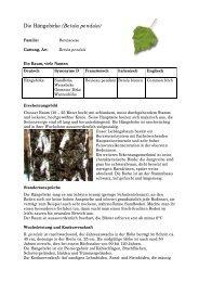 Die Hängebirke (Betula pendula) - Waldwissen.net