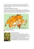 Die Hängebirke (Betula pendula) - Waldwissen.net - Page 2