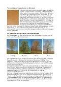 Die Hängebirke (Betula pendula) - Waldwissen.net - Page 3