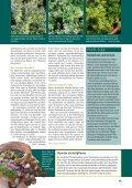 Mutmacher Thymian - Christel Rupp - Seite 2
